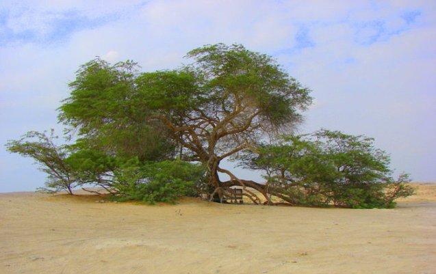 Дерево-земля